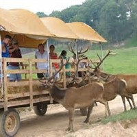 Red Deer Farm Of PA & More 2018