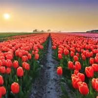 Ottawa Tulip Festival & 1000 Islands 2018