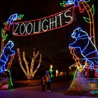 DC Zoo Lights and Christmas Tree 2018