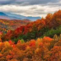 Autumn In The Smokies & Biltmore Estate 2021